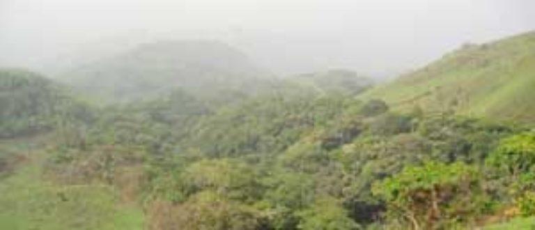 Article : Le cri de la forêt
